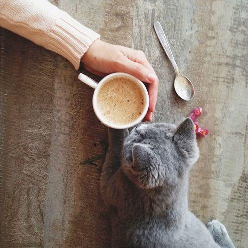 Kuvahaun tulos haulle cat having coffee