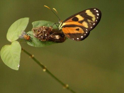 ... se encuentran la pequeña mosca y la esbelta  mariposa, en una danza de éxtasis  alrededor del néctar que reposa sobre una hoja.