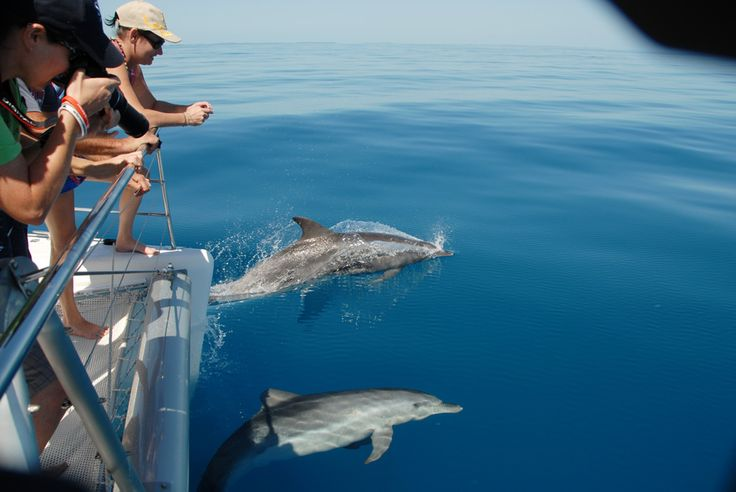 A beautiful day with the dolphins. Blue Dolphin Marine Tours, Hervey Bay, Australia