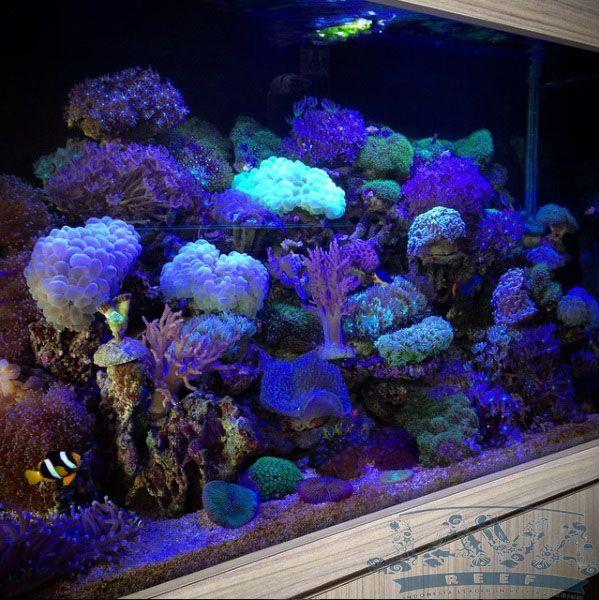 pemeliharaan aquarium air laut di tangerang