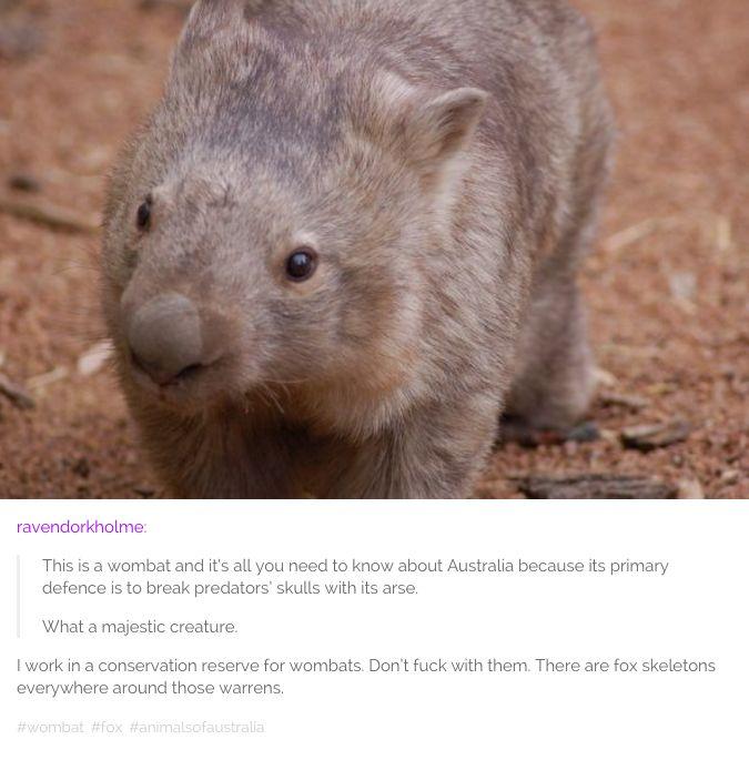 """Fucksakes"" - Ancient Australian proverb."