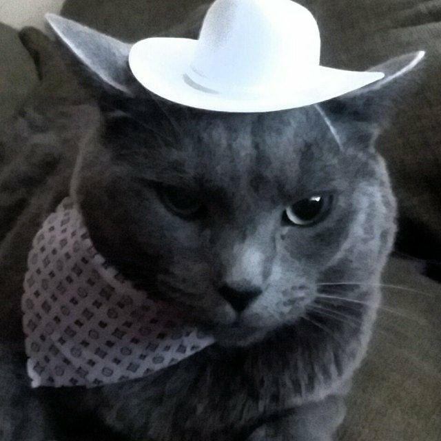 Meowdy Silly Hats White Cowboy Hat Cowboy Hats