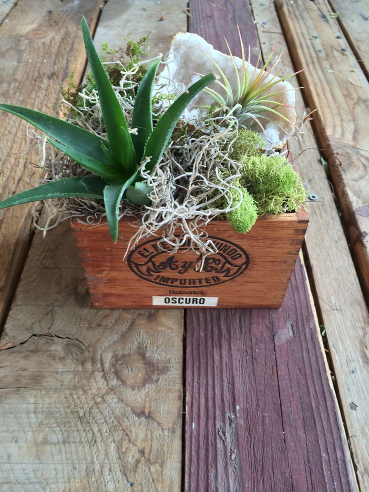 Succulent arrangement cigar box wedding centerpiece with geode and air plant by JuneBloomDesign on Etsy https://www.etsy.com/listing/214479185/succulent-arrangement-cigar-box-wedding