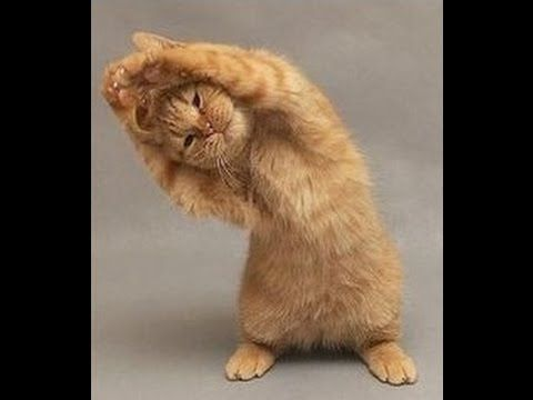 Funny Cat & Animals on Instagram Compilation - Mkls - YouTube