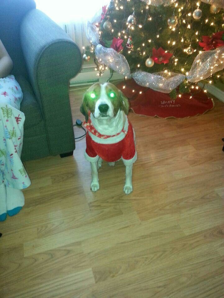 Hunter is ready for Christmas!