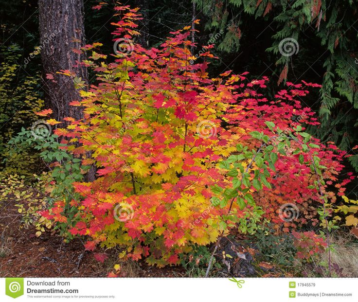 color tree bush - photo #14