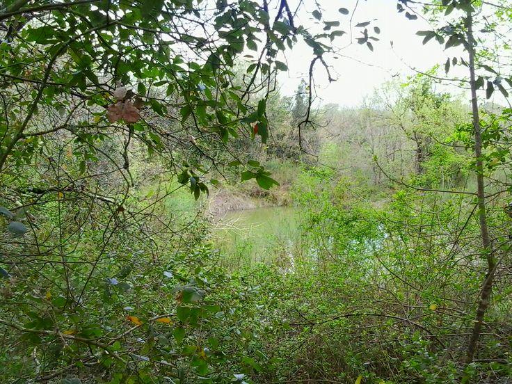 Laghetto naturale nel bosco, ex-trincea, Agriturismo Signorini