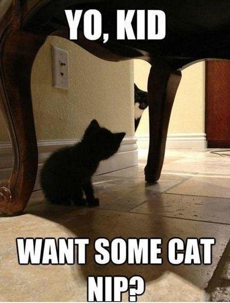 Yo, Kid... #catoftheday