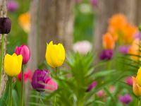 TRÄDGÅRDSDESIGN PRIMO - Vill du arbeta med trädgårdsdesign? Hos Trädgårdsakademin kan du utbilda dig till trädgårdsdesigner. http://trga.se/utbildning/tradgardsdesign-primo/