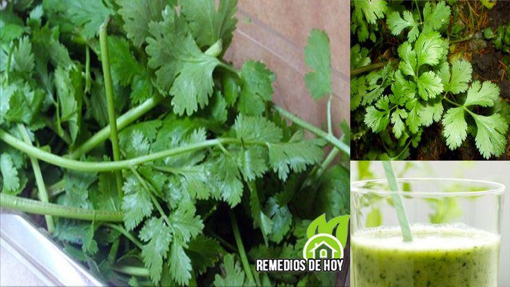Cómo utilizar el cilantro como un medicamento: para la desintoxicación de tu cuerpo del mercurio y vencer la inflamación crónica