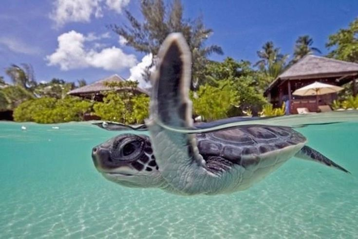 Wakatobi, Indonesia 30 Stunning Beaches & Lakes With The Most Crystal Clear Waters In The World • Page 2 of 6 • BoredBug