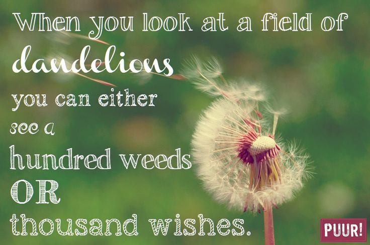 When you look at a field of dandelions you can either see a hundred weeds or thousand wishes.