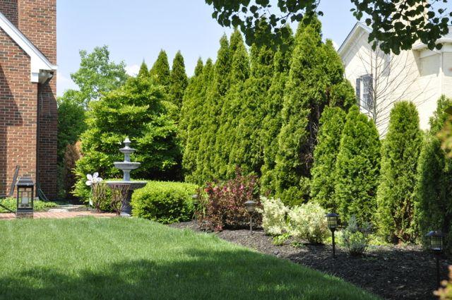 The 25 best arborvitae landscaping ideas on pinterest for Arborvitae garden designs