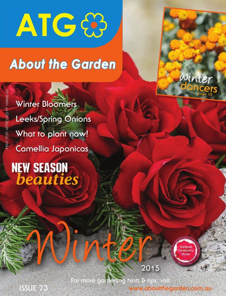 About the Garden Magazine WINTER 2015  This issue of About the Garden Magazine learn about the following Winter Bloomers, Leeks/Spring Onions, What to Plant Now, Winter Dancers, Camellia Japonicas, New Season Beauties and Winter Hints & Tips.