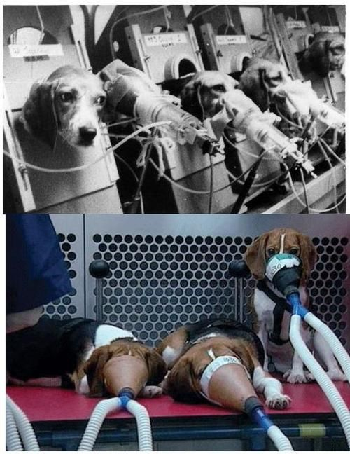Very disturbing. Animal testing, in this case dogs, for tobacco companies. Stop the abuse!