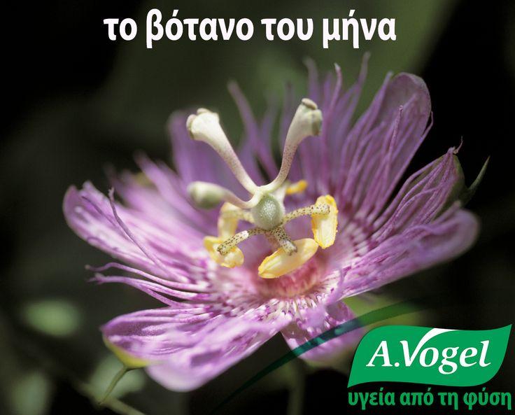 Πασσιφλόρα (Passiflora incarnata)  Γενικά, η επίδραση του βοτάνου αφορούσε το νευρικό σύστημα, ειδικά προβλήματα αϋπνίας εξαιτίας νοητικής ανησυχίας και υπερεργασίας. Η πασσιφλόρα έχει χρησιμοποιηθεί παραδοσιακά για την αντιμετώπιση νευρικής ανησυχίας και γαστρεντερικών σπασμών.