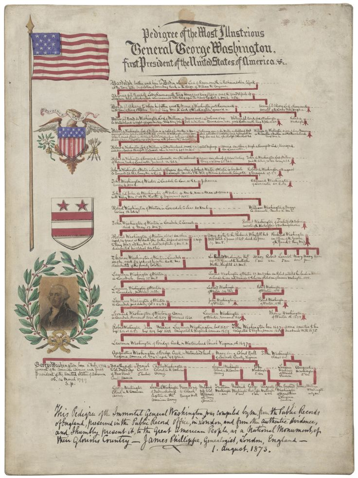 George Washington's Family Tree Pedigree of the Most Illustrious General George Washington, first President of the United States of America, 08/01/1873 This illustrated lineage chart was presented by genealogist James Phillippe of London, England to President Ulysses S. Grant in 1873. Want to research your own ancestry? Check out the National Archives' Genealogy resources → What illustrious personalities are hiding in your family tree?