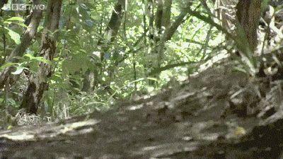 Running Fast. Think it's a kakapo