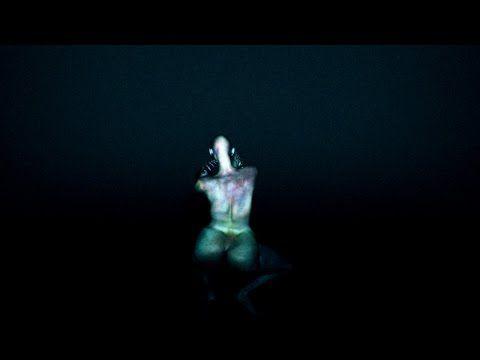 Arca: Xen review – producer Alejandro Ghersi's elegant, chromatic debut | Music | The Guardian