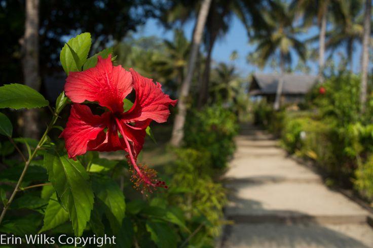 Vanuatu, Aore island resort