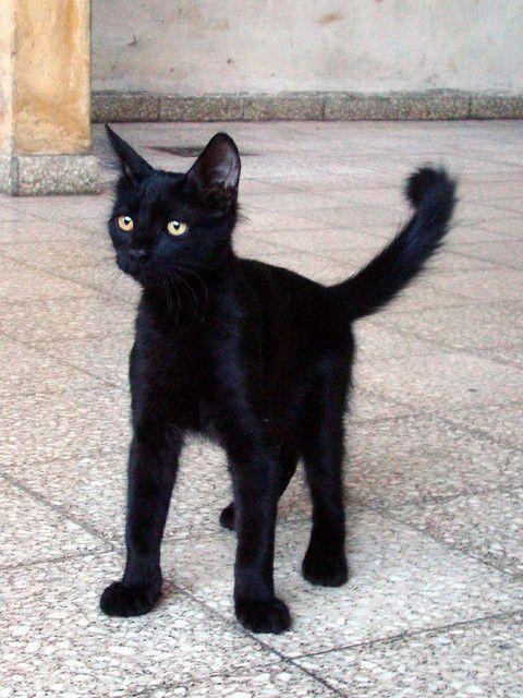 Gato negro...