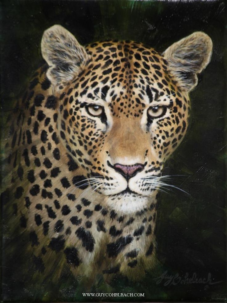 PORTRAITS OF THE BIG CATS 12 Big cats art