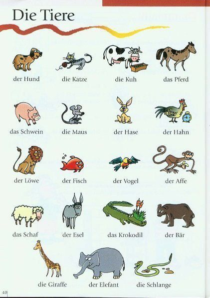 ANIMAIS (Die Tiere)                                                                                                                                                                                 Mais