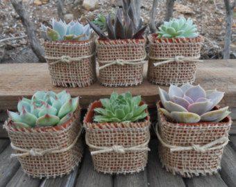 succulents decor - Google Search