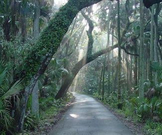Florida: Florida States, Canopies Roads, Florida Home, Favorite Places, States Parks, Design Photo, Highlanders Hammocks, Hammocks States, Old Florida