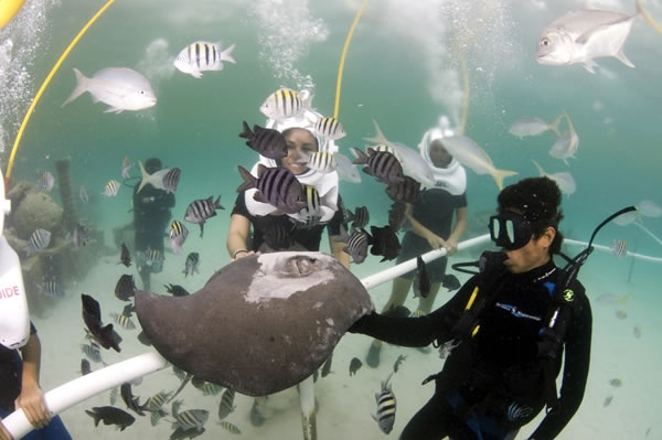 Must do! Walk on the seabed. The Sea Trek allows you to breathe comfortably, naturally and safely under water.