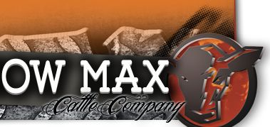 Showmax Cattle Company :: Club Calf Genetics :: Yankton, South Dakota