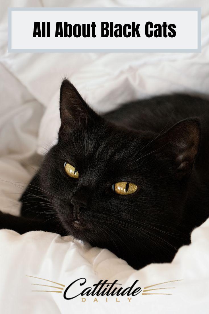 Black Cat Facts In 2020 Black Cat Breeds Cat Facts Cats