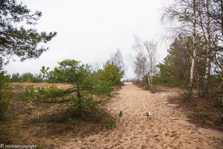 my inner city light #myinnercitylight #beach #autumnonthebeach #jackrusselterrier #forest
