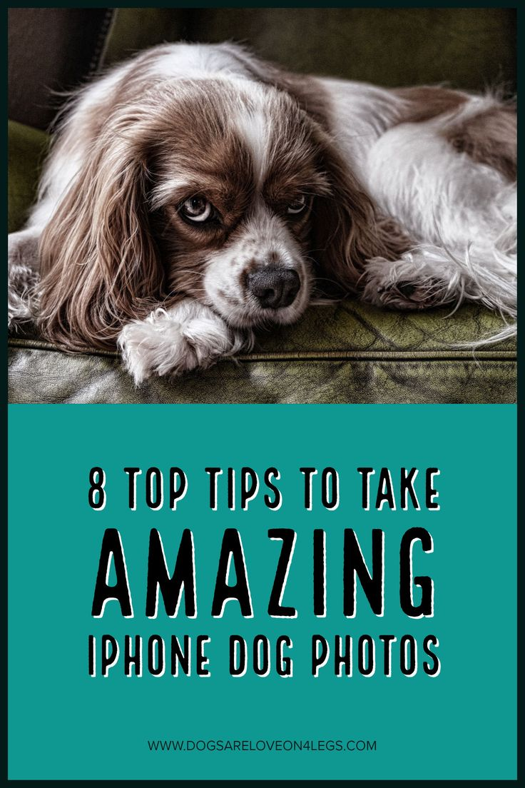 8 Top Tips To Take Amazing iPhone Dog Photos | Dog, Dog Photography, iPhone, iPhone Photos, Dog Photos