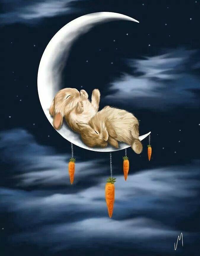 2927 besten guten abend gute nacht bilder auf pinterest gute nacht guten morgen und kaninchen. Black Bedroom Furniture Sets. Home Design Ideas