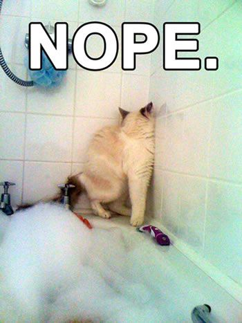 Nope: Cats, Giggle, Animals, Nope, Bath, Funny Stuff, Humor, Funny Animal