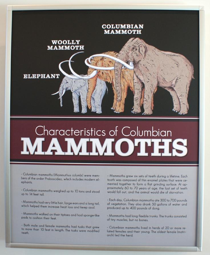 Characteristics of Columbian Mammoths | Educational ...