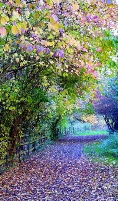 Georgios Pasxalidis - Google+ - Watermead Country Park,Leicestershire, England