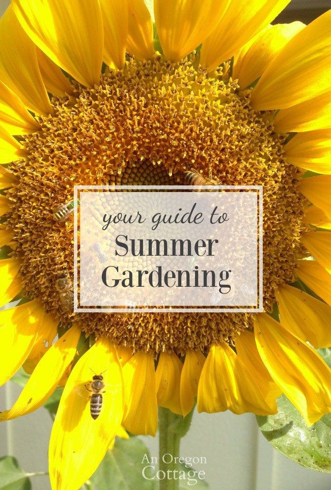3511 best garden inspiration images on pinterest gardens landscaping and plants - Gardening in summer heat a small survival guide ...