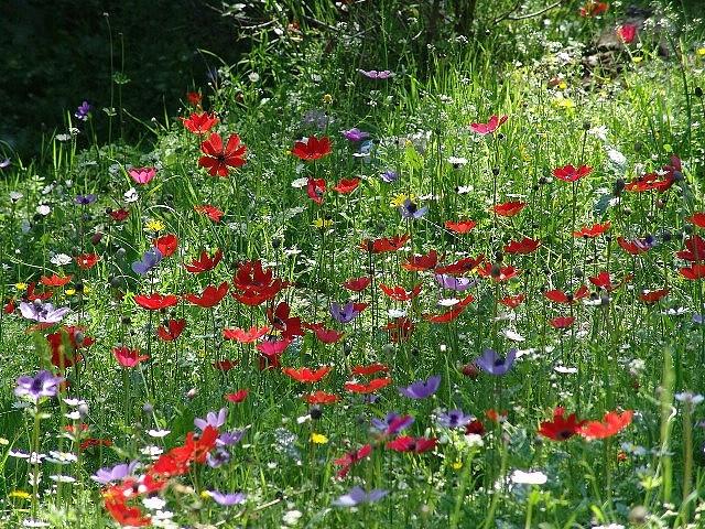 Spring in Lesvos, Greece
