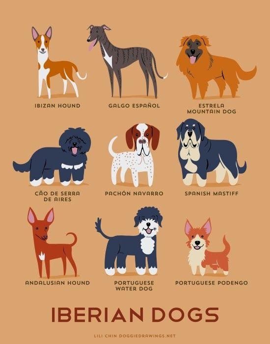 UMA VESPA A ABRANDAR: De onde vem tanta raça de cão?