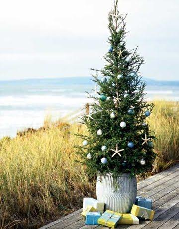 Christmas at the beachSea Stars, Nautical Christmas, Xmas Trees, Beach Christmas, Beach House, Decor Christmas Trees, At The Beach, The Sea, Coastal Christmas