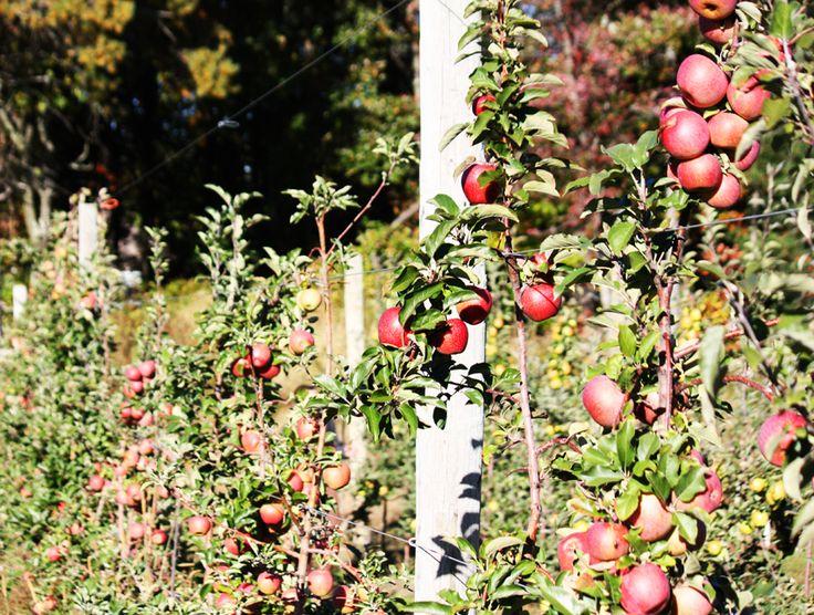 Map of Top 10 Apple Picking Farms Near Boston