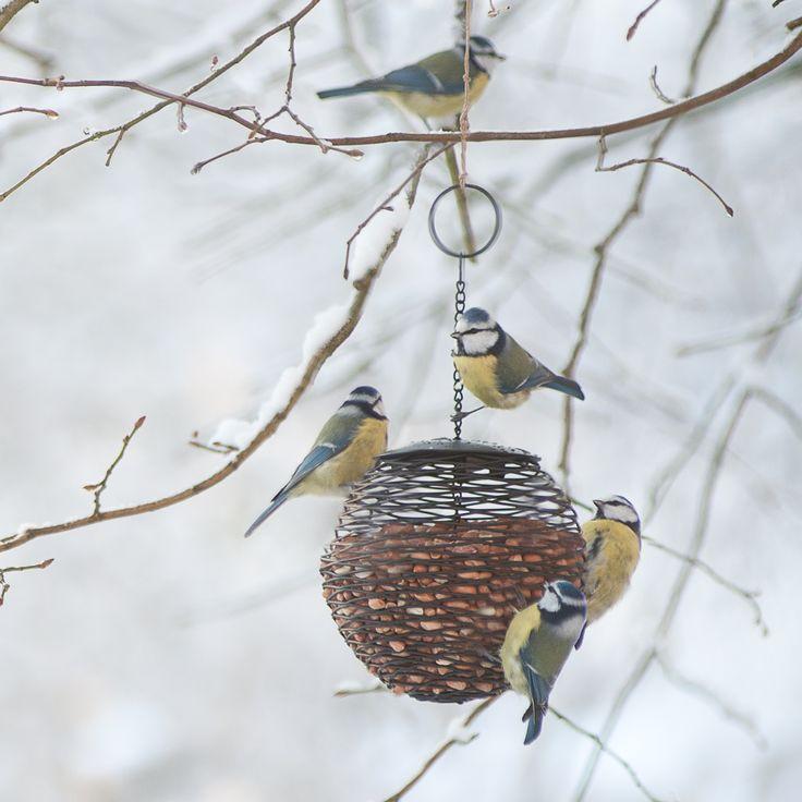 Grote bol waar u vogelvoer in kan doen voor vogels. De pinda's gaan goed, maar ook grote zaden en noten. In het voorjaar leuk om er honden-of kattenharen in te doen, daar maken de mezen hun nestje van.