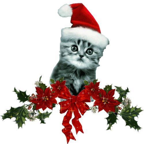 Todo Mascotas: Preciosos Wallpapers de Animales Navideños!