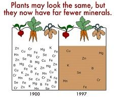 Why Supplement with Plant Derived Minerals?