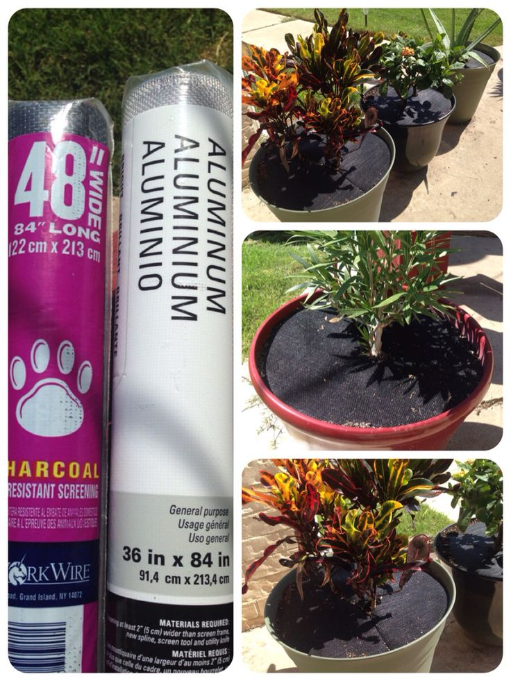 PetProof Potted Plants If your dogs like to eat the