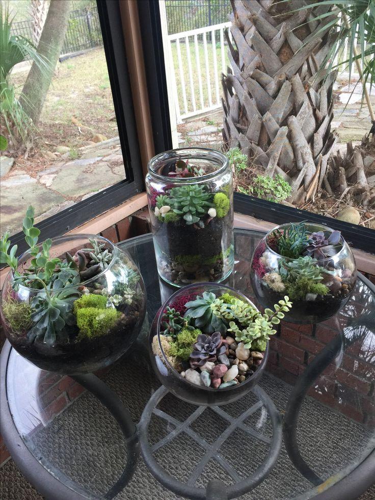 New terrariums
