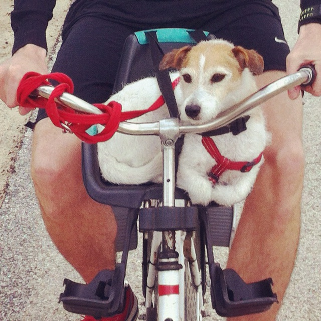 Small dog fits just perfect in baby chair on bike
