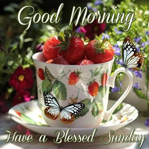 Good Morning. Have a Blessed Sunday.